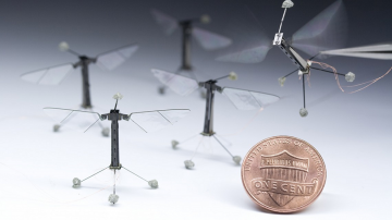 Robobees, with penny included for scale
